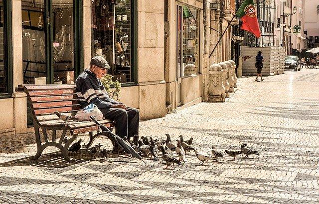 krmení holubů