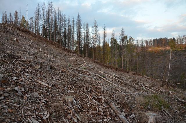 zničený les